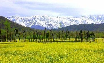 Srinagar tourism, srinagar tour package, places to visit in srinagar, srinagar trip, srinagar holiday packages, delhi to srinagar volvo bus, volvo bus from delhi to srinagar