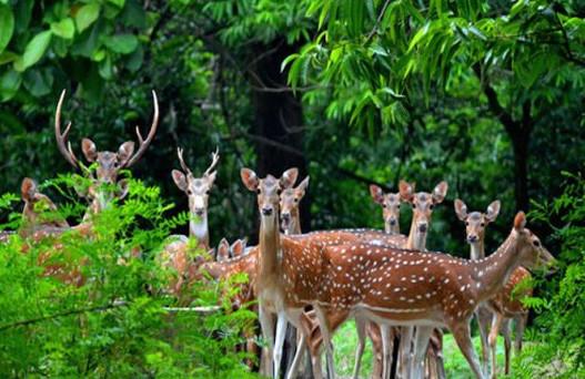 places to visit in nahan, delhi to nahan volvo, renuka lake in nahan, nahan sightseeing, best time to visit nahan, nahan hill station, nahan snowfall, sehgal transport service