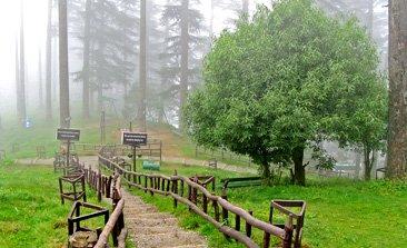camping in dhanaulti, dhanaulti snowfall, dhanaulti hill station, dhanaulti sightseeing, eco park, surkanda devi temple, devgarh fort, trekking in dhanaulti, delhi to dhanaulti volvo bus, tempo traveller on rent in delhi, Luxury bus booking