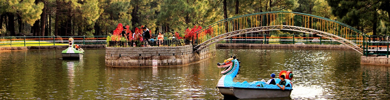 places to visit in palampur, palampur tourist places, things to do in palampur, kangra valley, tea garden, delhi to palampur bus, Tata Luxury bus, Tempo Traveller on rent in delhi, delhi to palampur volvo bus