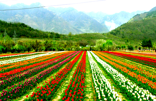 places to visit in srinagar, tourist places in srinagar, sehgal travels