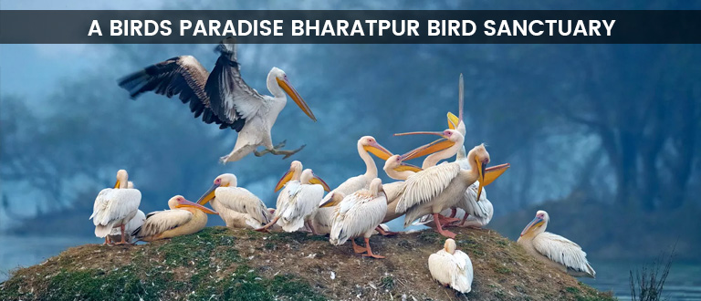 Bharatpur Bird Sanctuary, Keoladeo National Park, Places to visit in Bharatpur, delhi to bharatpur bus